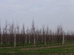Frutteti della frazione di Castellazzo